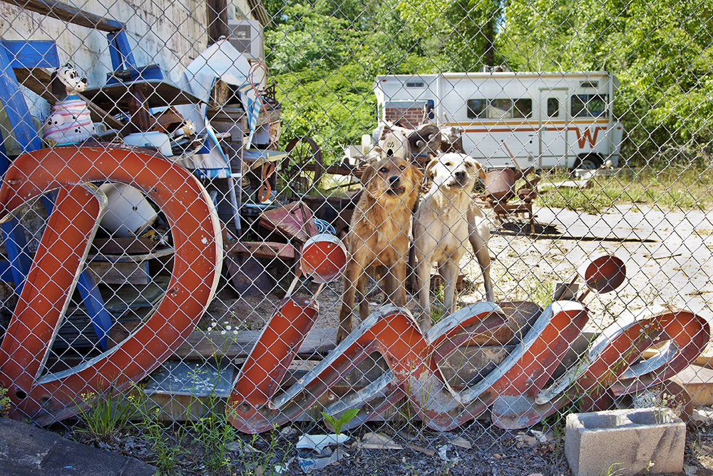 """Photo """"Dixie Dogs"""" by Lucinda Bunnen - two dogs looikng at viewer from behind link fence with """"Dixie"""" sign"""