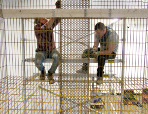 Daniel Johnston and his assistant installing a structure at the Gregg Museum